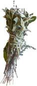 Bouquet garni, bosje kruiden