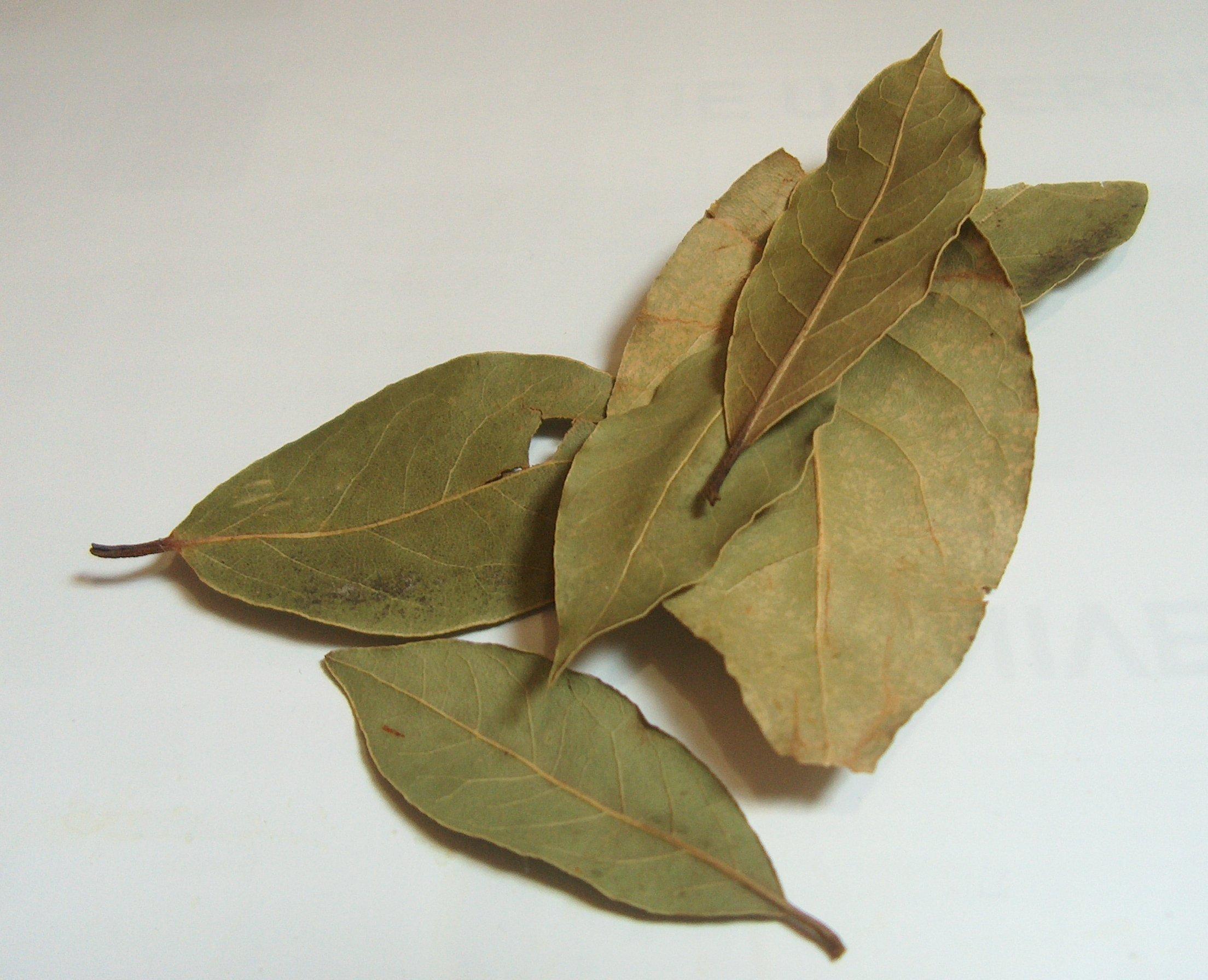 Gedroogde laurierbladeren