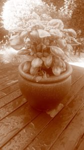 Basilicum foto met sepia filter